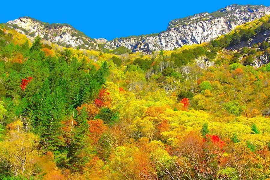 【秋瑟彩林】黃龍景區、達古冰川、四姑娘山、米亞羅、畢棚溝、熊貓基地八日