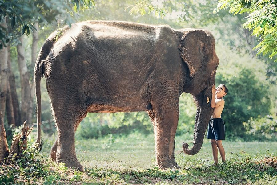 亞航假期-清邁泰好玩叢林騎象帕耀湖大象便便紙DIY5+1日遊《含稅簽》