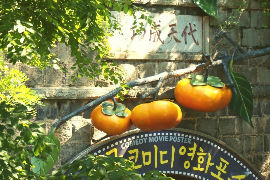 【促銷9888起】樂遊釜慶邱 八公山纜車、薰衣草花園、夢幻教堂、柿子酒