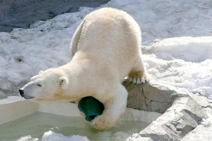 【北海道美食主義】旭山動物園、富良野玩雪、璀璨函館5日(千歲函館)