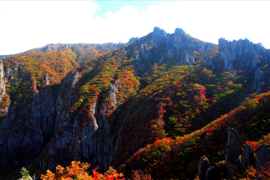 楓遊濟~親親萌鹿、漢拏山楓景、四季花園、樂高、塗鴉秀、活跳跳海鮮鍋5日