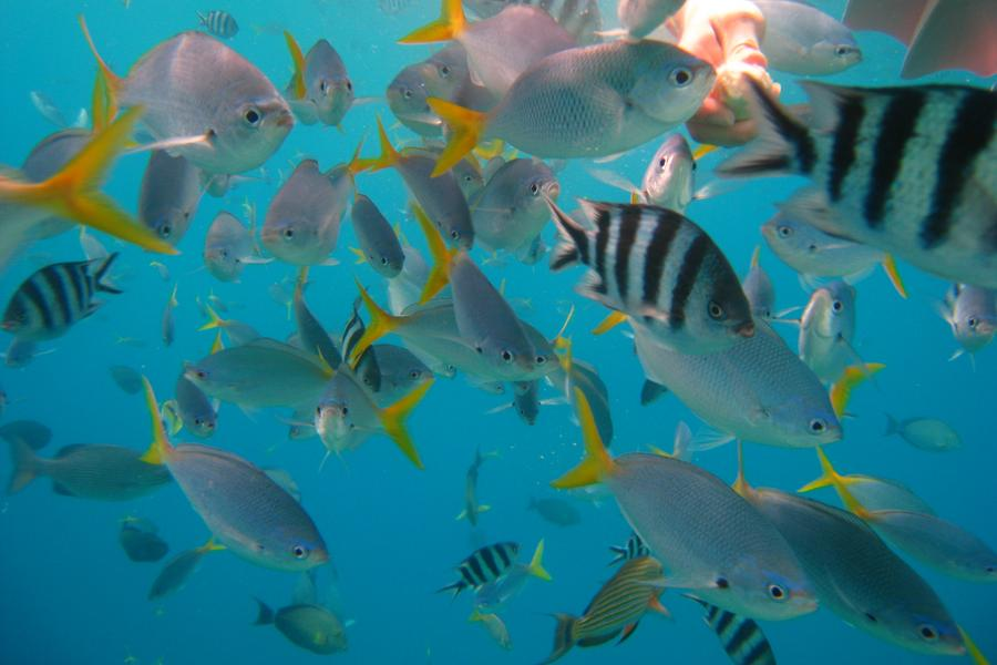 帛琉北島海陸玩透透、水母湖、大斷層、海豚灣優質6日-日暉飯店