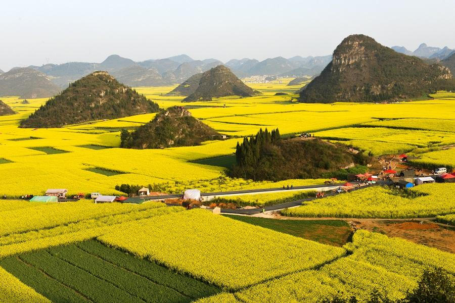 【油山玩水盡在貴州】黃果樹瀑布、馬嶺河大峽谷、羅平油菜花8日