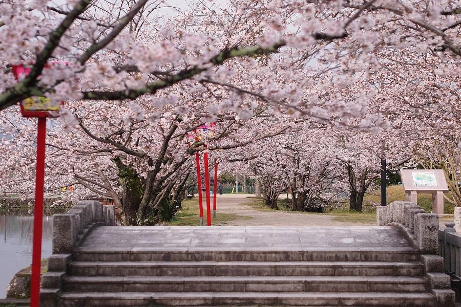 【春櫻九州物語】久住花園、舞鶴公園、御船山、扁舟遊船、鶴見岳纜車5日