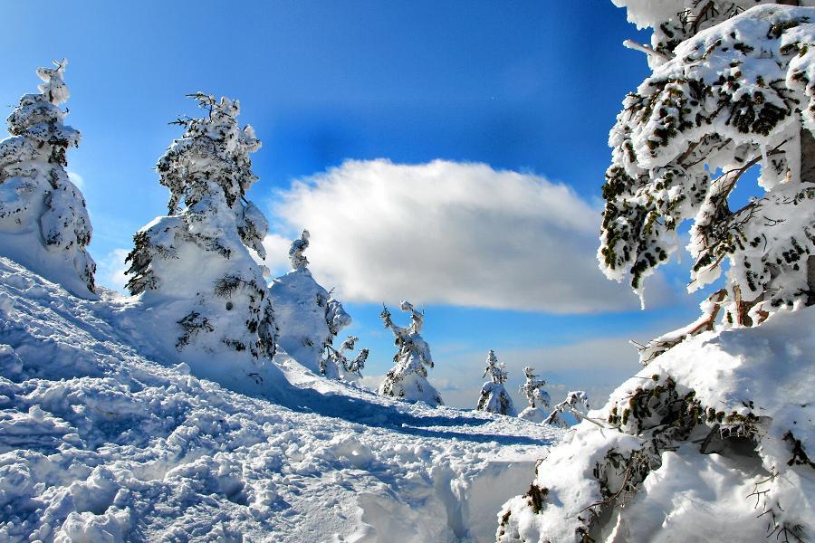 【藏王森林】纜車賞樹冰、新幹線、松島、鬼怒川、雪上香蕉船、東京採果5日