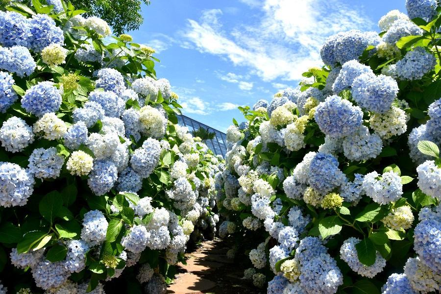 五星鉑爾曼~韓國平康樹木園、可愛羊駝樂園、VR體驗、南怡島5日