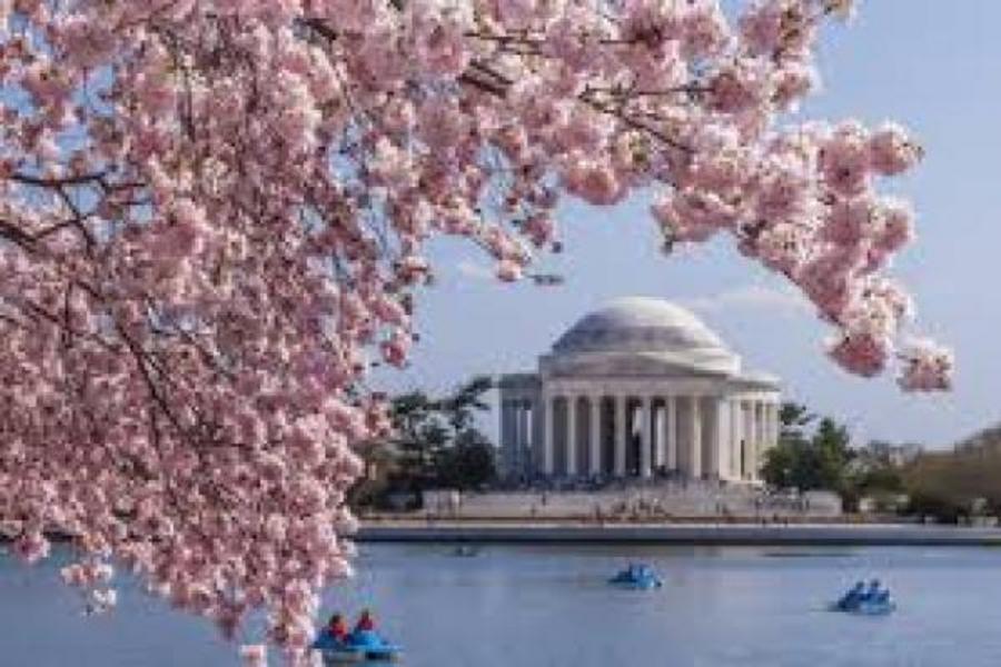 春櫻飛舞美東尼加拉瀑布 華盛頓櫻花季 賞櫻遊船 紐約 費城 10日
