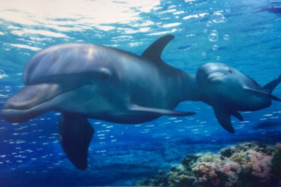 釜蔚秘境 伊甸園溜溜車、松島纜車&天空步道、鯨魚生態館、長腳蟹美食5日