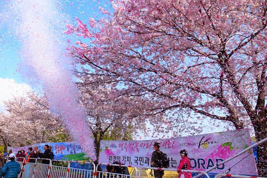 【主題旅遊】2019慶州櫻花馬拉松、汗蒸幕、鎮海賞櫻五日_不進人蔘保肝