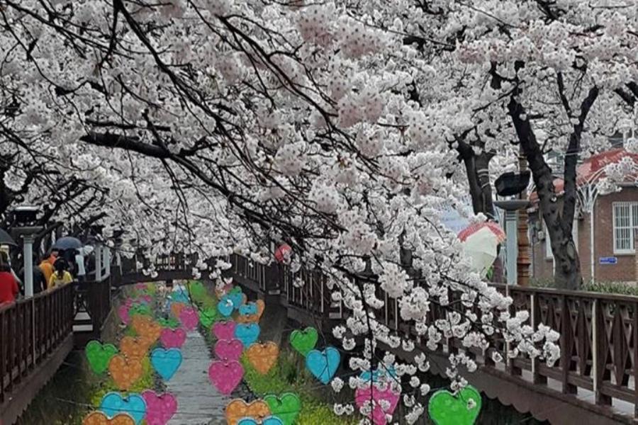 【鎮海賞櫻】花現釜山~浪漫櫻花路、鐵道自行車、草莓酒莊、天空步道4日