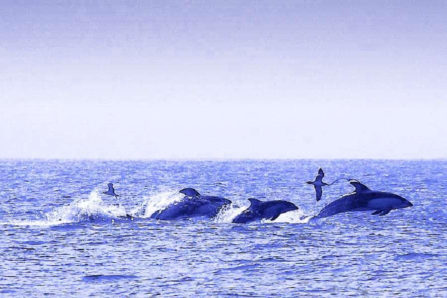 【酷玩北海道】室蘭與海豚共舞、海峽の風、森之空庭、富良野花舞大地
