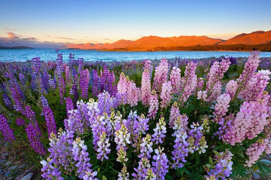 【蜜月典藏】紐航直飛紐西蘭南北島、地熱冰河、峽灣火車、美食體驗10日