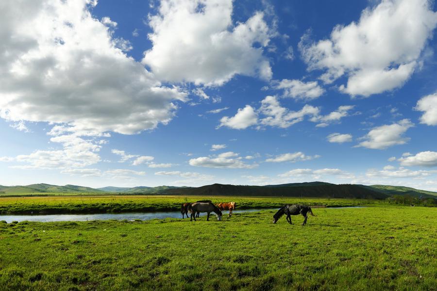 【長榮航空】東蒙古呼倫貝爾草原、額爾古納濕地、滿州里、莫爾道嘎森林八日