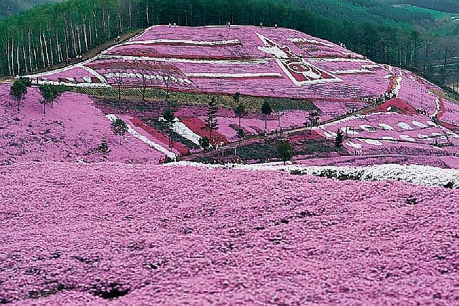 【北海道限量特惠】道東秘境、釧路濕原、芝櫻鬱金香5日(千歲千歲)