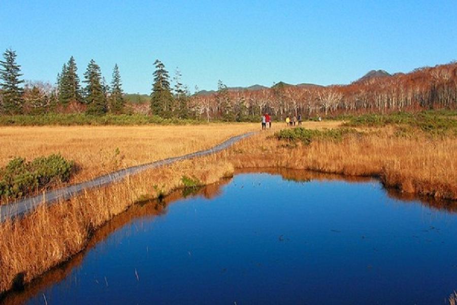 【秋楓好元氣北海道】函館山夜景、紅葉藝術森林、神仙沼好美、和牛螃蟹5日