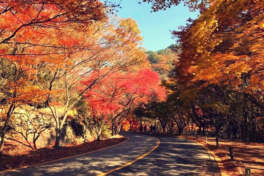 楓之釜~內藏山、八公山纜車、金井山城、韓服遊韓屋5日《不進人蔘、保肝》