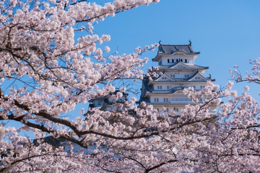 【鑽石公主號】春櫻爛漫~關西賞櫻之旅11日
