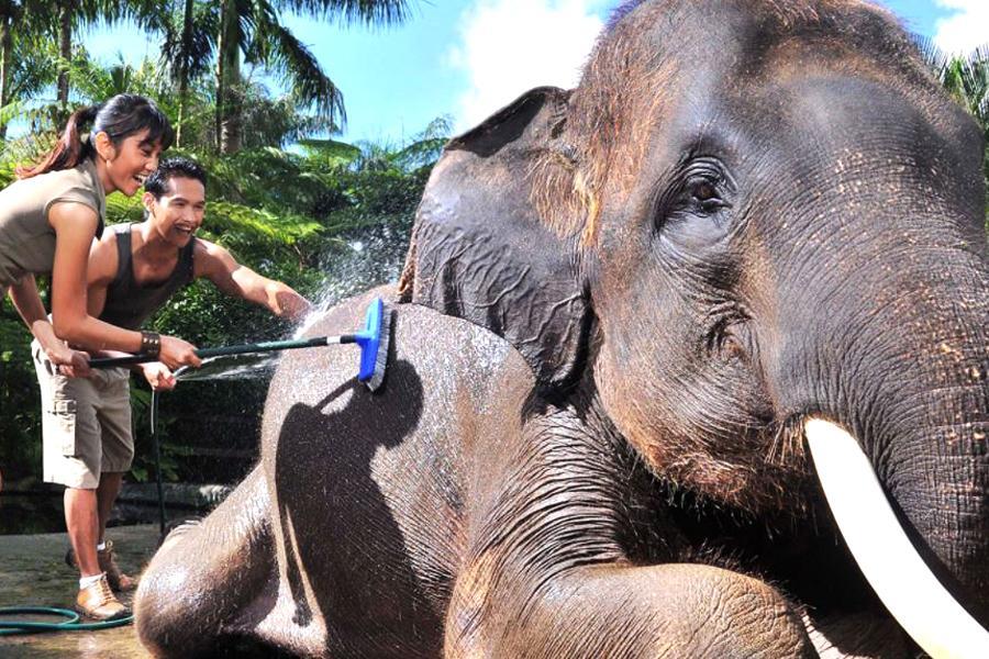 【親子 i峇里 - 小孩不佔床半價】烏布洛克酒店 + 大象主題公園 + 兩晚獨棟泳池別墅峇里島自由行5日