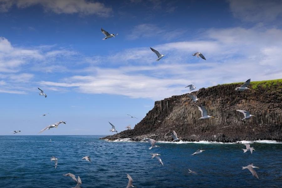 【迎夏澎湖】夜釣小管、東海巡航、快樂渡假村三日_台北出發