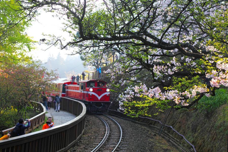 【綠光森林】阿里山森林鐵道‧嘉義輕旅行二日