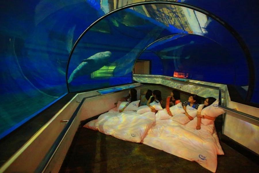 【與魚共眠】夜宿墾丁海洋生物博物館‧高鐵二日遊