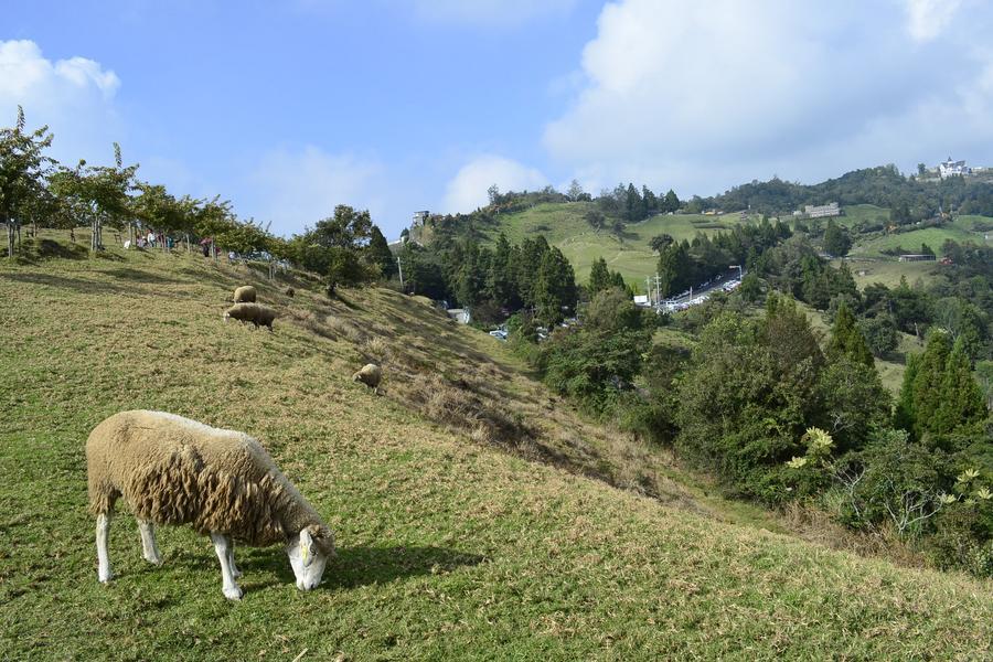 絕美高山景觀公路-清境農場、合歡山一日遊
