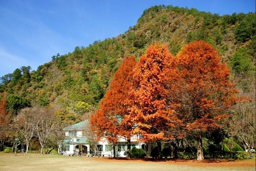 《經典賞楓》奧萬大綠光森林.溪頭米堤童話城堡假期三日《楓紅季約11月中~12月中》