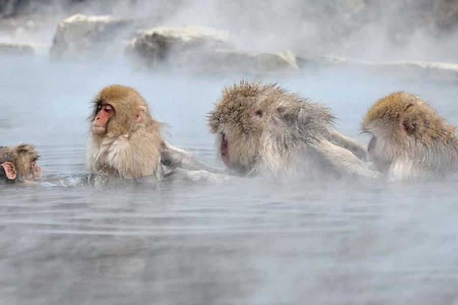 *超值玩雪北海道*大沼雪上釣魚.函館猴子愛泡湯.小樽螃蟹放題5日(千歲千歲)