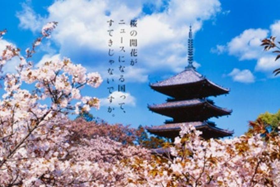 【星光櫻傳奇】關西百選櫻名所‧花見湯樂美饌5日
