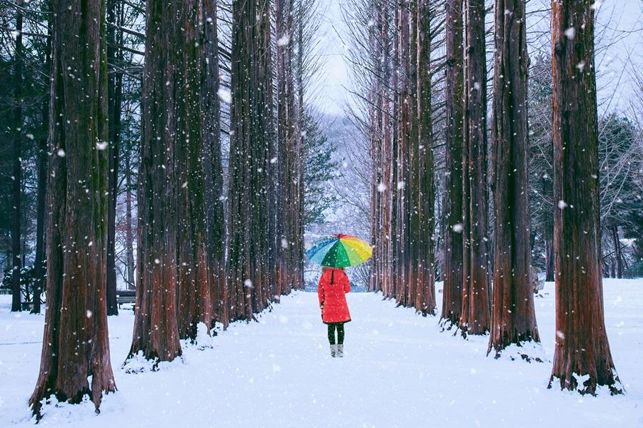 【升等2晚市區】銀色雪嶽 滑雪趣、冰雪奇緣、南怡島、汗蒸幕、廚師秀5日