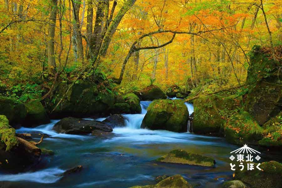 【能登假期-楓紅奧入瀨溪】採水果、狔鼻溪、銀山溫泉、小安峽噴泉5日