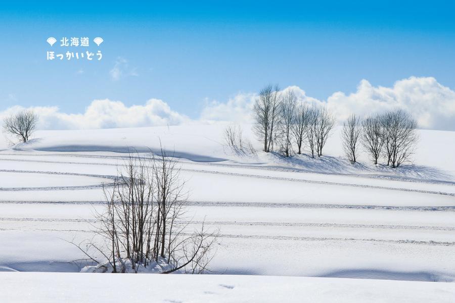 【北海道雪國謐宿】冬の美瑛大地、定山溪花紅葉秘湯、旭岳雪山森旅5日