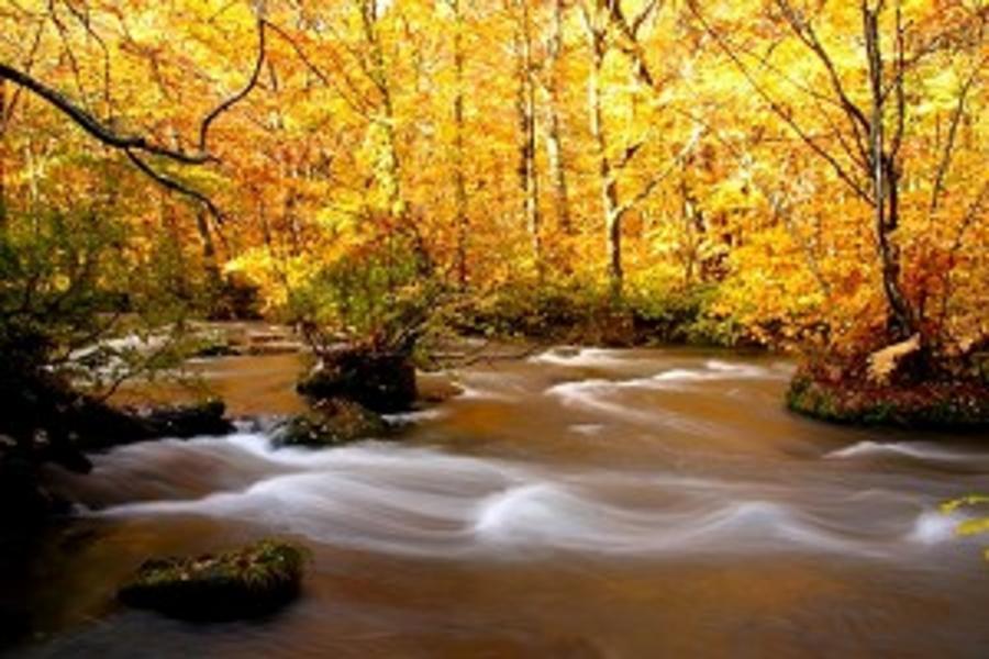【秋色絕美奧入瀨溪】十和田湖快艇體驗、岩手追楓、百選溫泉森の風5日