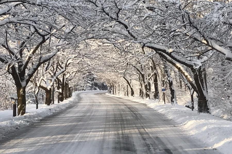【升等2晚市區】冬戀雪嶽.滑雪.船橋莊.烏竹軒.汗蒸幕5日(不進保肝)