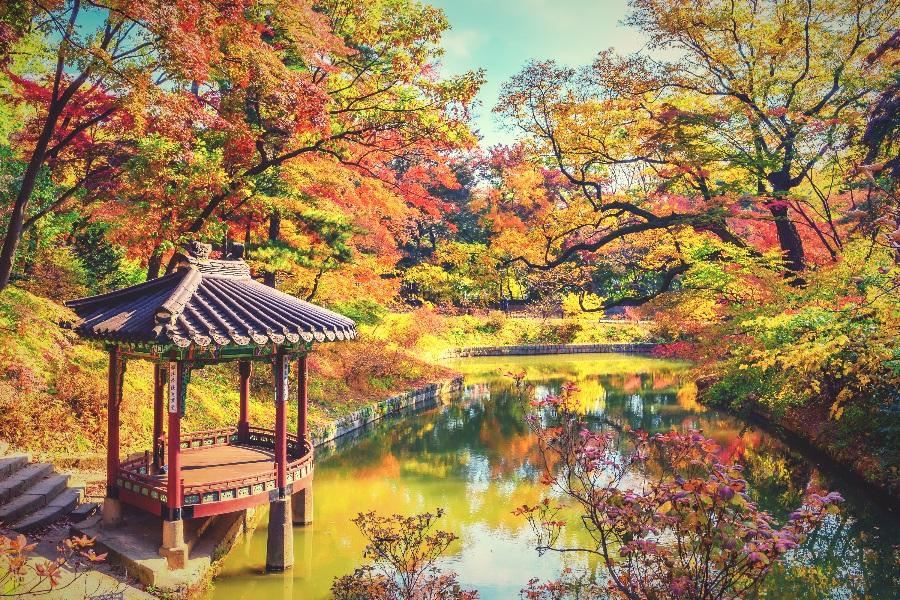 韓楓魅力~龍門寺銀杏、酒莊、樂天水族館、室內溜冰、晨靜樹木園6日