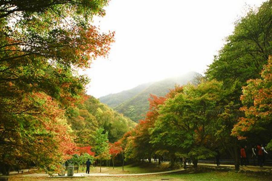 楓遊韓國~內藏山、馬耳山紅蔘SPA、全州韓服逛韓屋、南山纜車、塗鴉5日