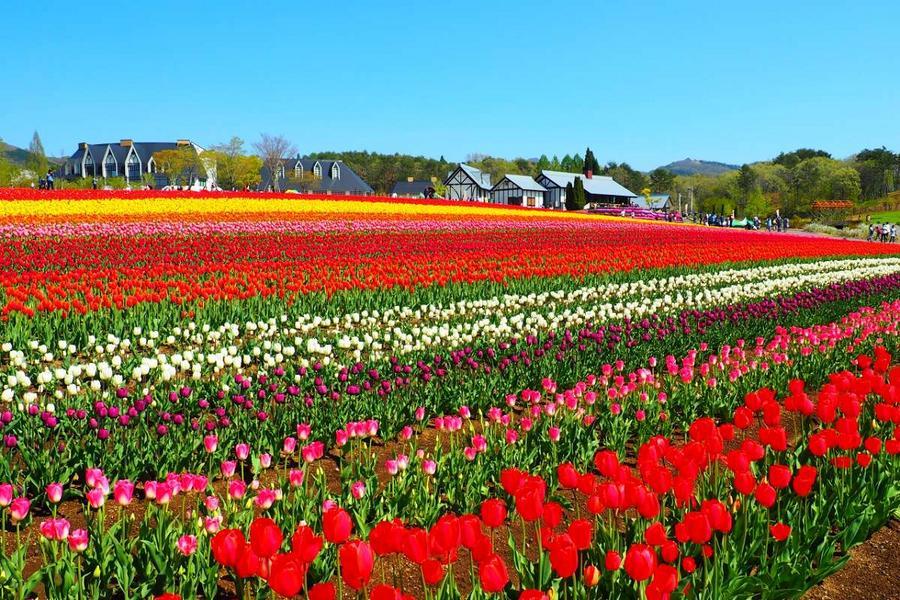 【童樂趣】富山花田牧場、上高地、遊船、立山合掌村5日
