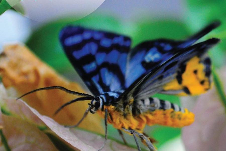 蘭卡威魅力遊 |東方村纜車、艷陽三離島、蟲鳴大地、娘惹下午茶DIY5日