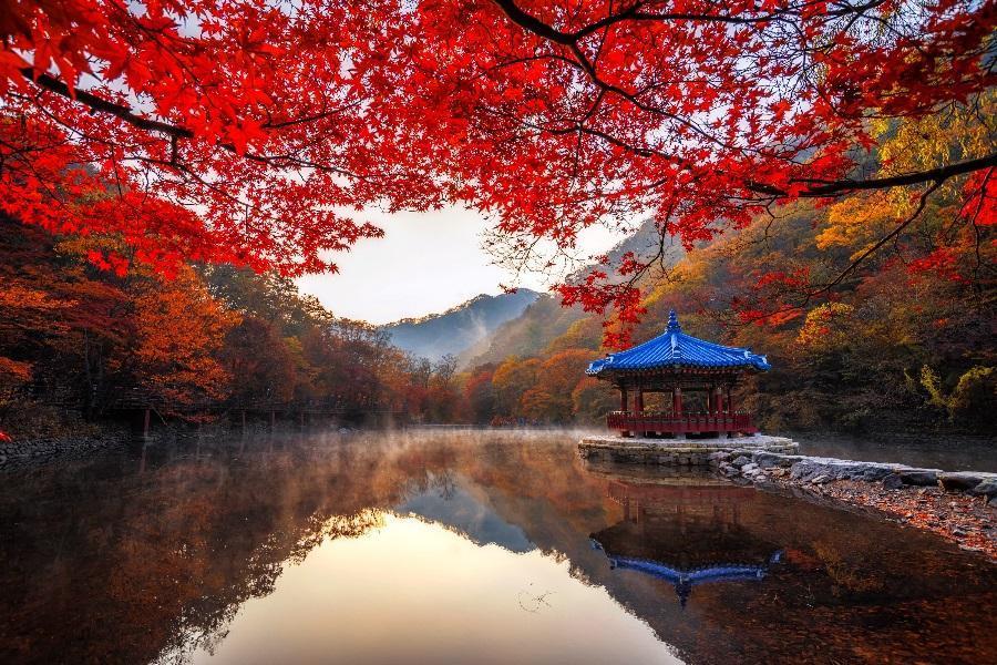 【五星希爾頓】楓紅內藏山~韓國熊之森公園、小希臘村、韓服遊韓屋、汗蒸幕