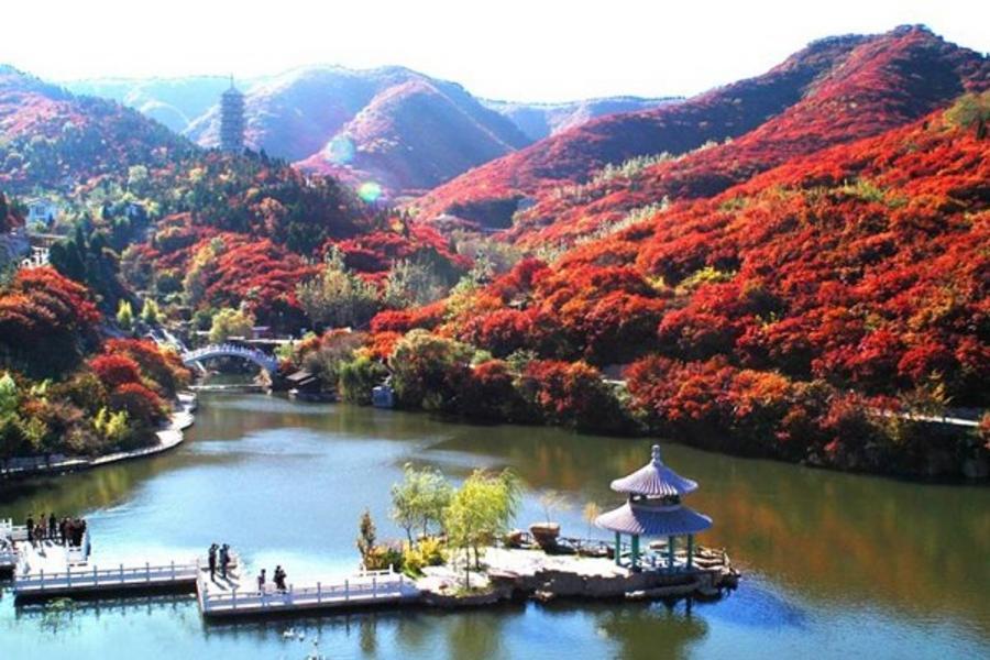 山東泰山、濟南紅葉谷、十裏銀杏林6日(蒸汽石鍋雙鮮宴、鮑魚)