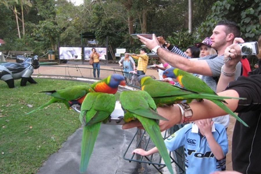 澳洲繽紛三城 布里斯本 黃金海岸 雪梨七日~庫倫濱動物園、螢火蟲、塘鵝、歌劇院、遊船、纜車BS