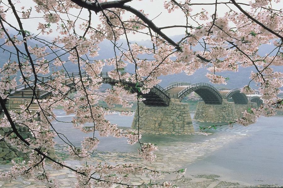 【春櫻廣島】道後溫泉、錦帶橋、嚴島神社、後樂園、姬路城、心齋橋購物6日