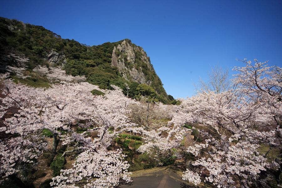 春賞九州 島原芝櫻、御船山樂園 稻佐山夜景5日
