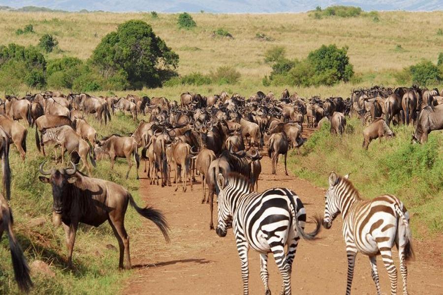 探索肯亞、安伯塞利國家公園、馬賽馬拉保護區、動物遊獵之旅10日
