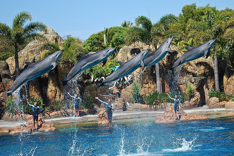 驚奇黃金海岸~海豚島~農莊,樂園,抓蟹趣七日