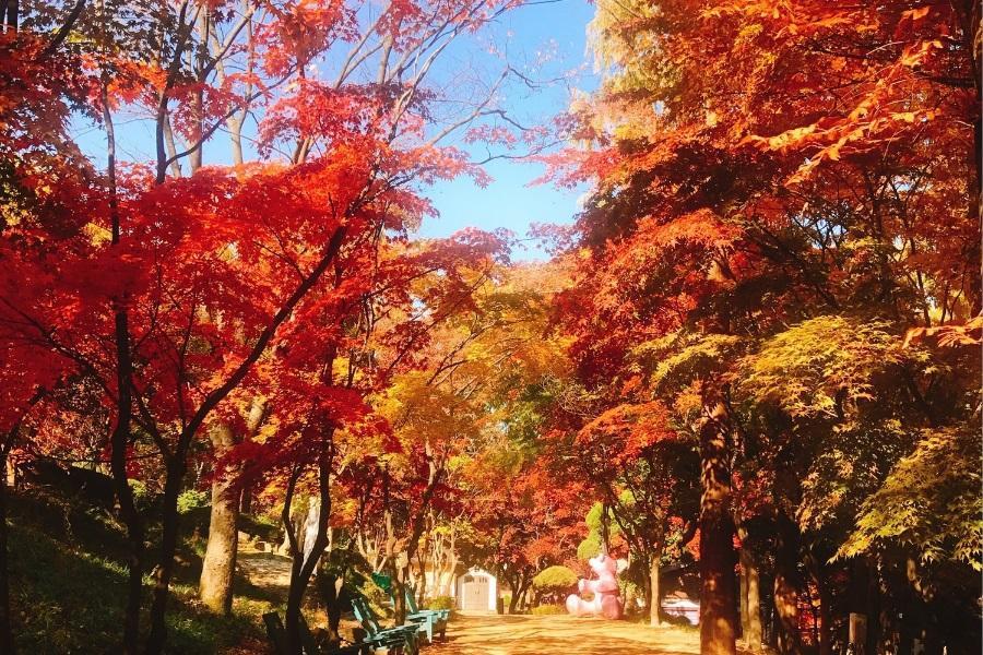 繽紛釜慶~跑跑人體驗館、美人魚表演、薰香花園、米田共和國、文化遺產5日