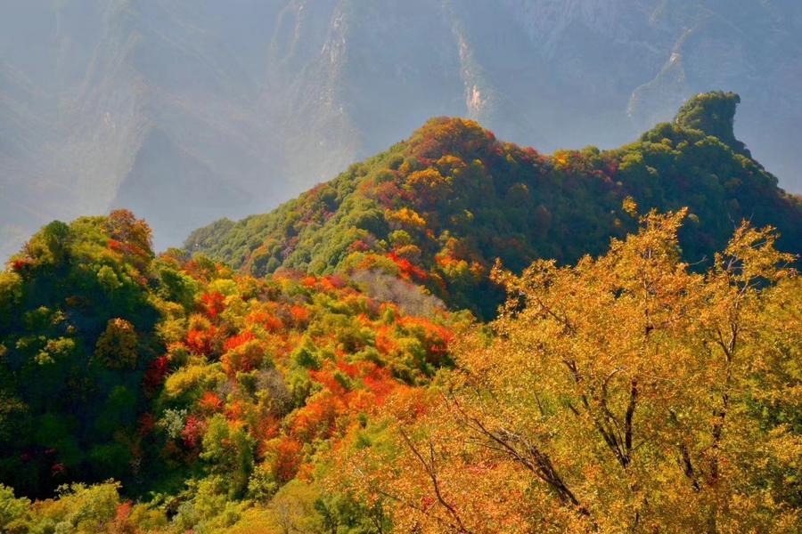 【立榮航空】西安FUN輕鬆 ~ 少華山賞紅葉、中式下午茶、兵馬俑4日
