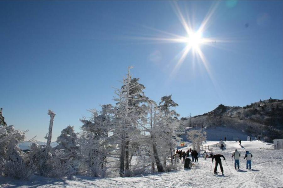 【升等特二五花】冬戀釜慶~伊甸滑雪、文化遺產、下午茶、龍蝦海鮮鍋5日