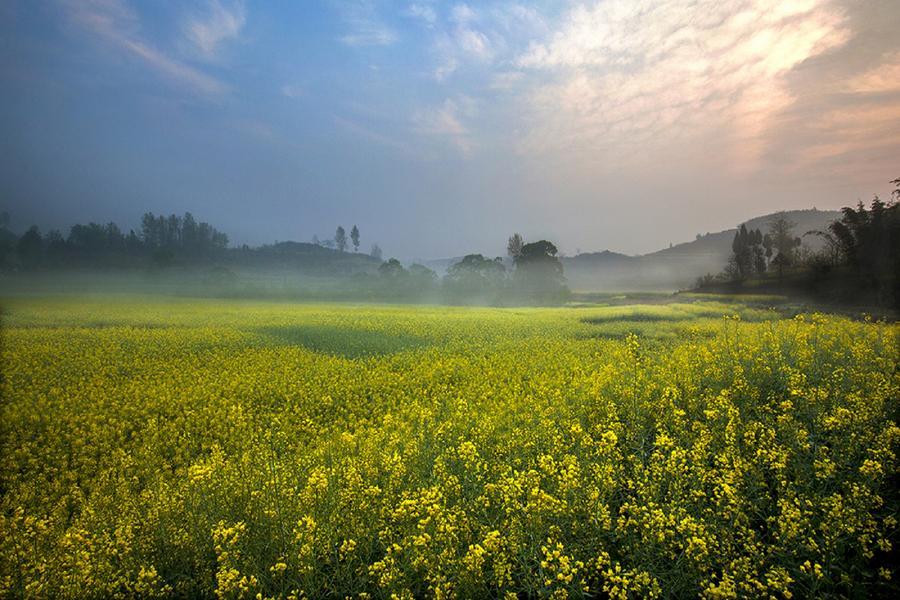 《鼠來寶》冬日豔黃油菜花海、黃果樹瀑布、舌尖貴州8日