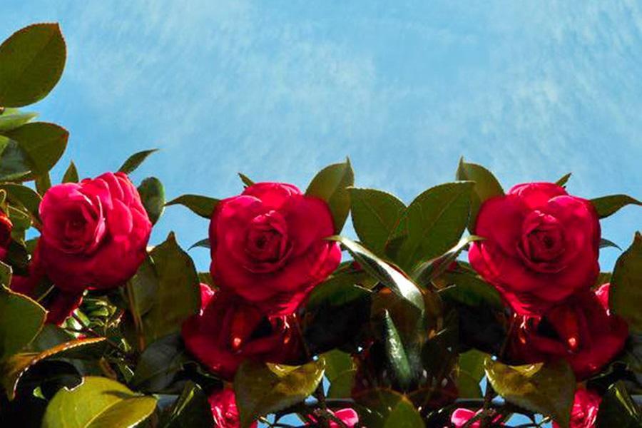 【五星藍鼎】神話樂園、泰迪熊、噢!雪綠茶、香蕉牛奶主題、山茶花園4日